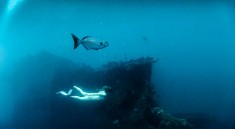 Free diving in Indonesia